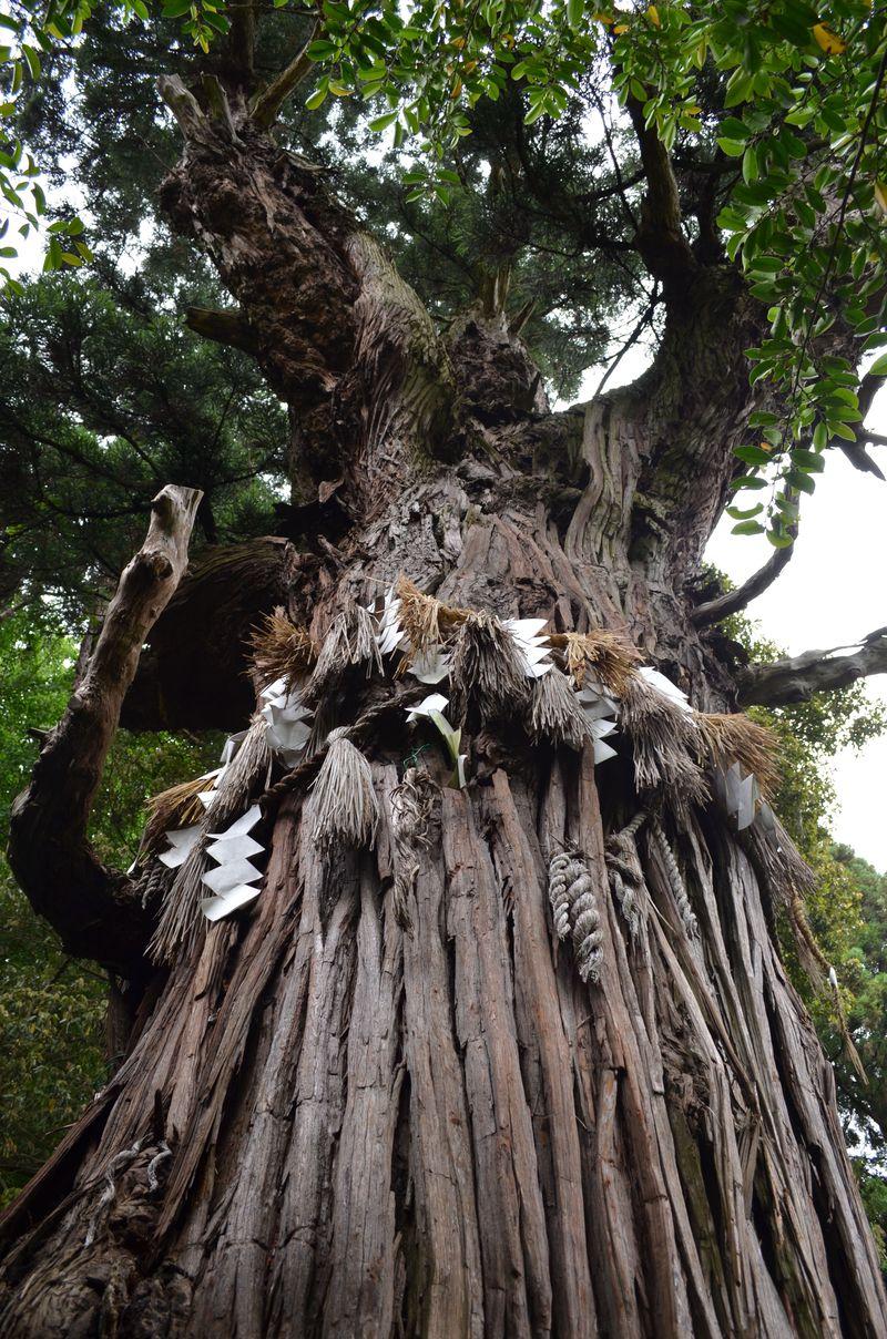 宮城県「多賀城」鬼門のパワースポットに隠された意味とは?