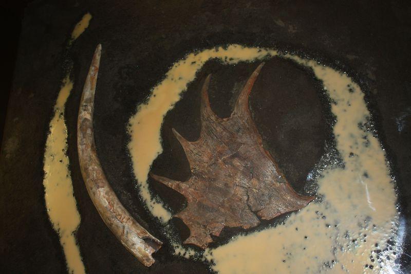 長野県「野尻湖ナウマンゾウ博物館」氷河期時代、日本にゾウがいた!