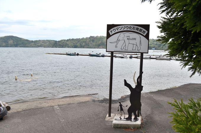 野尻湖から発掘されたナウマンゾウ
