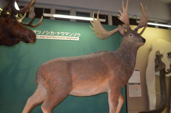 野尻湖は世界有数の狩り場遺跡(キルサイト)だった!