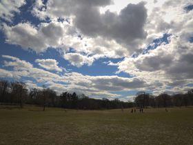 ブルックリン地元民の憩いの場、プロスペクトパークで自然を堪能