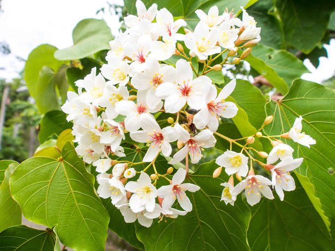 アートと鉄道橋と純白の花の町・三義郷
