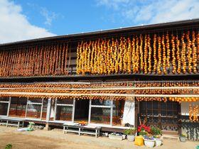 甲州市塩山「ころ柿のカーテン」柿の天日干しを巡るおすすめコース