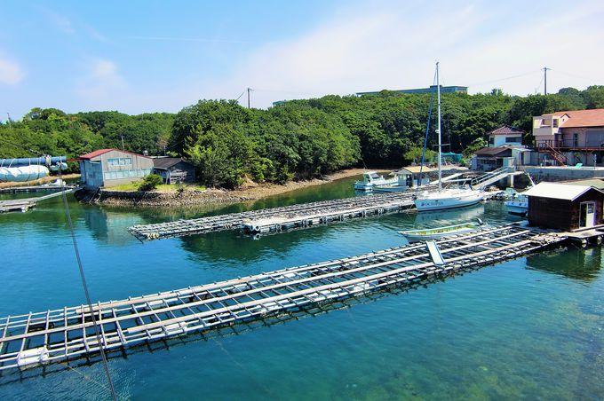 あご湾は真珠養殖の発祥地