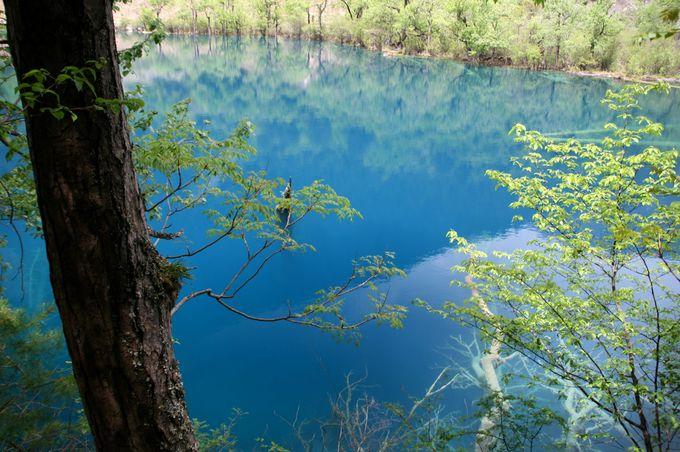 奥ゆかし藍色「老虎海」