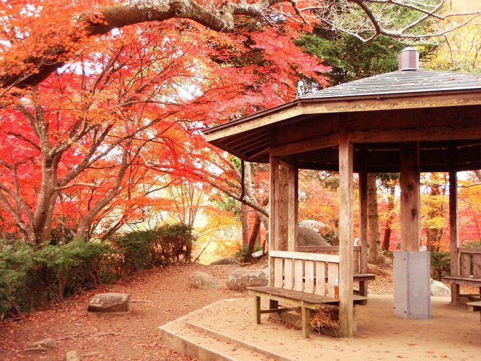 紅葉した木々に囲まれた山頂