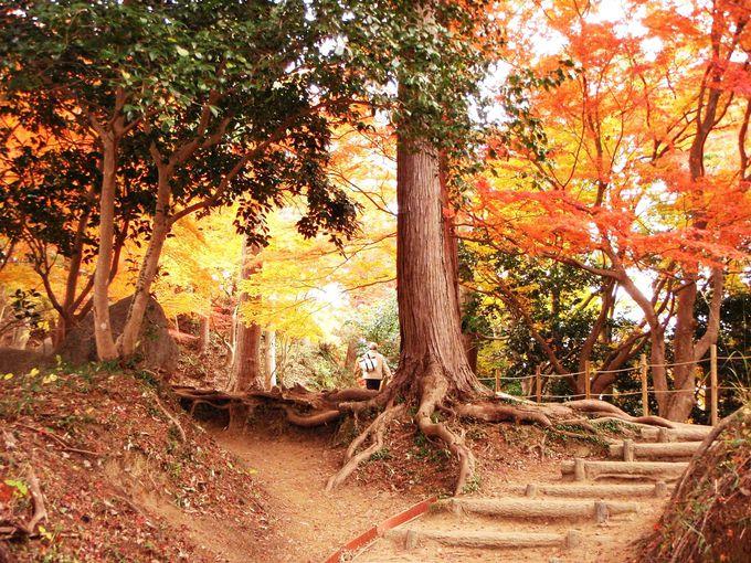 紅葉を楽しむ20分のハイキング