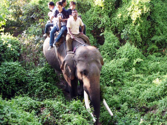 10.チトワン国立公園