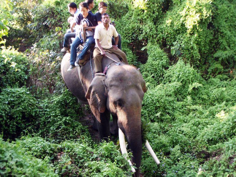 象に乗ってジャングル散策!ネパール「チトワン国立公園」