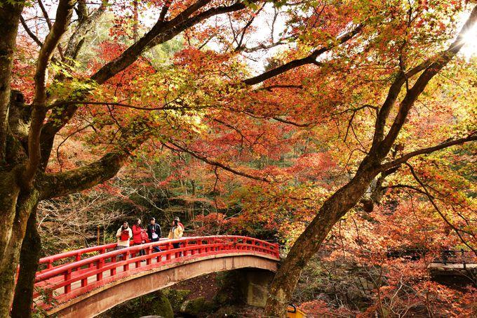 愛知県を代表する紅葉の名所