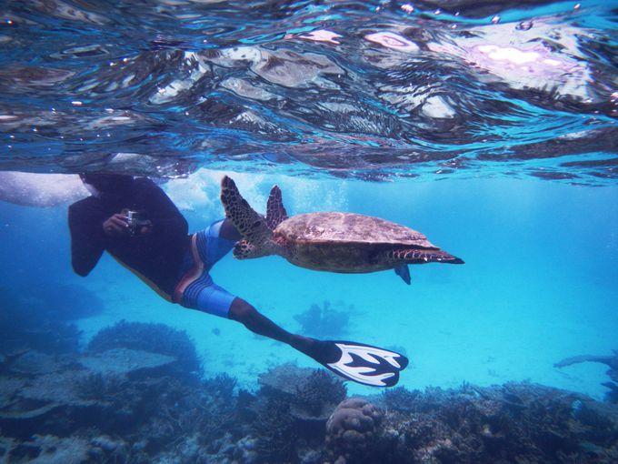 「シュノーケリングツアー」でモルディブの海を堪能!