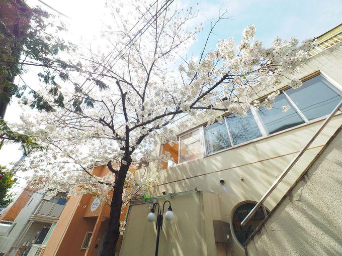 黒湯に舞う桜の絶景