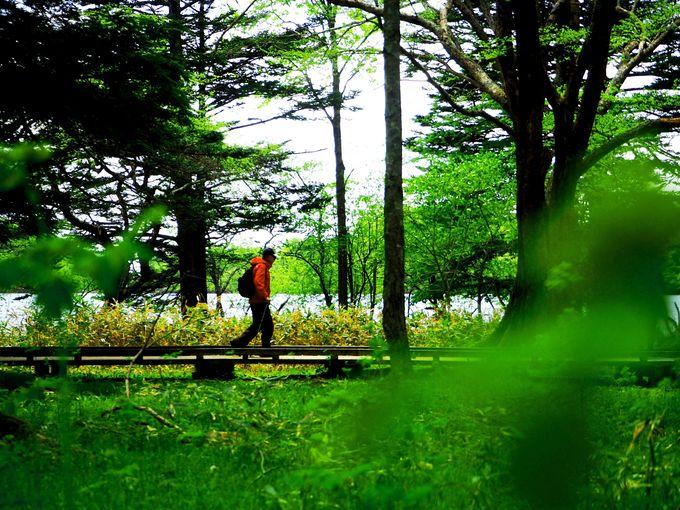 絶対おすすめ!湯ノ湖〜湯滝〜戦場ヶ原のハイキングコース