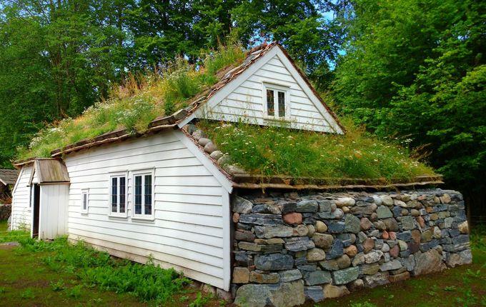 なぜか、屋根に雑草のび放題!?