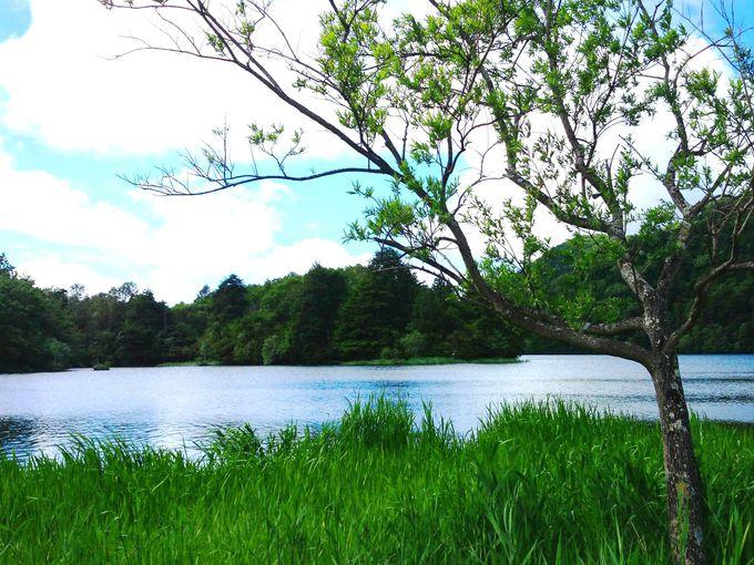 竜頭の滝と合わせて行きたい!奥日光の美しき湖「湯ノ湖」