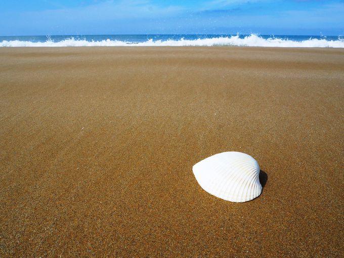 どこまでも続く砂浜で、日本海の旅情にハマってみる