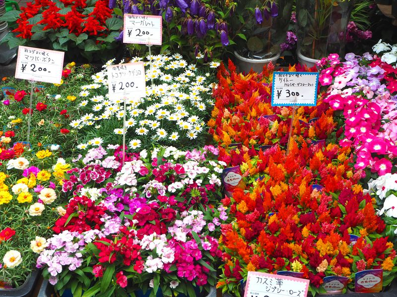 女子にもおすすめ!5月&6月最後の週末は浅草の「植木市」を要チェック