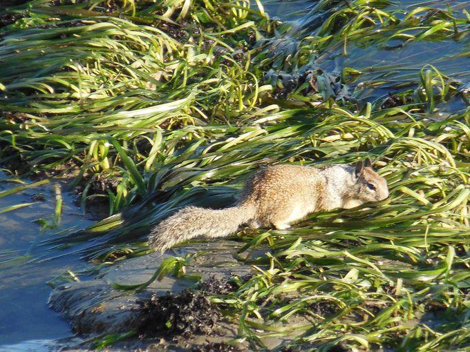 さまざまな生き物に出会う水辺