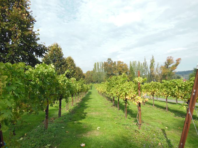 ワインはワシントン州の誇る特産品