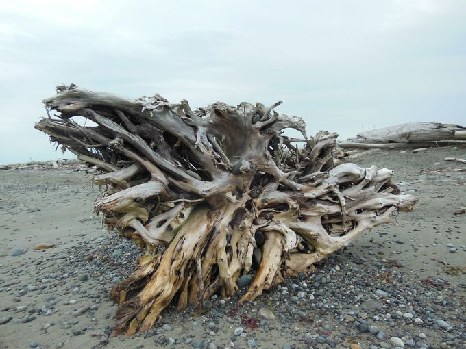 どこまでも続く美しい海岸線!ダンジェネス自然保護区