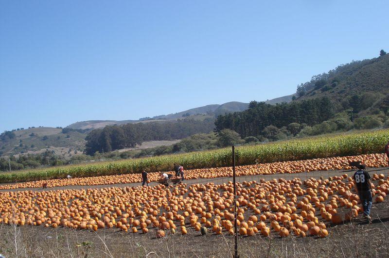 オレンジ色に染まる秋!カリフォルニアのパンプキン・フェスティバル