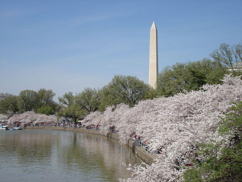 春に行くべきアメリカのおすすめ観光スポット5選 桜満開の公園も!