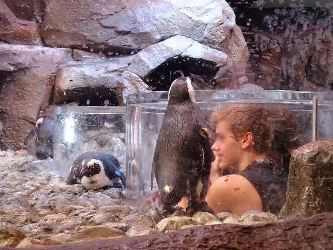 ジョージア水族館では圧巻のイルカショーが!