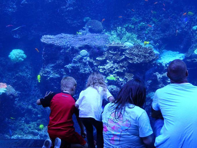 3.ジョージア水族館