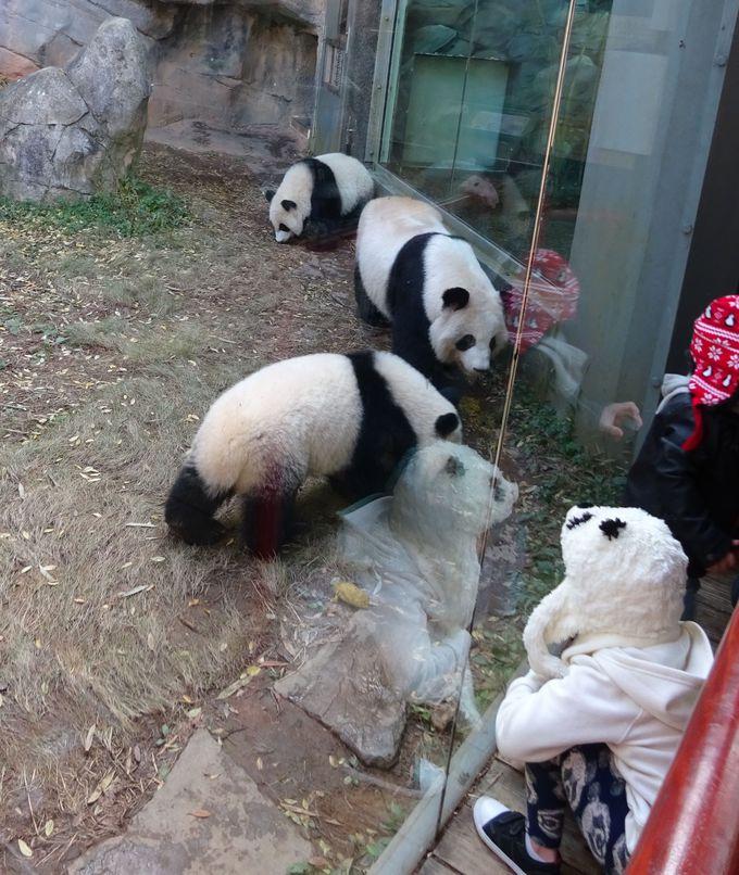 まずは双子のパンダに会いにいこう!