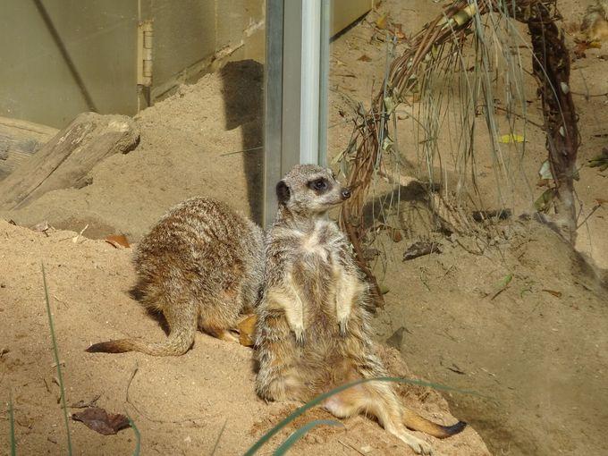 19世紀末、アトランタ動物園の誕生