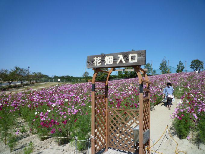 季節の花が咲き誇るお花畑