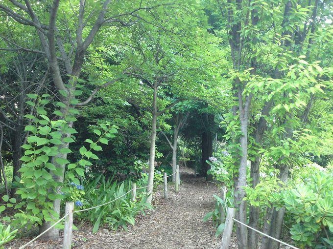 森林浴の小径(こみち)は、自然林の中を散策しているかのよう!