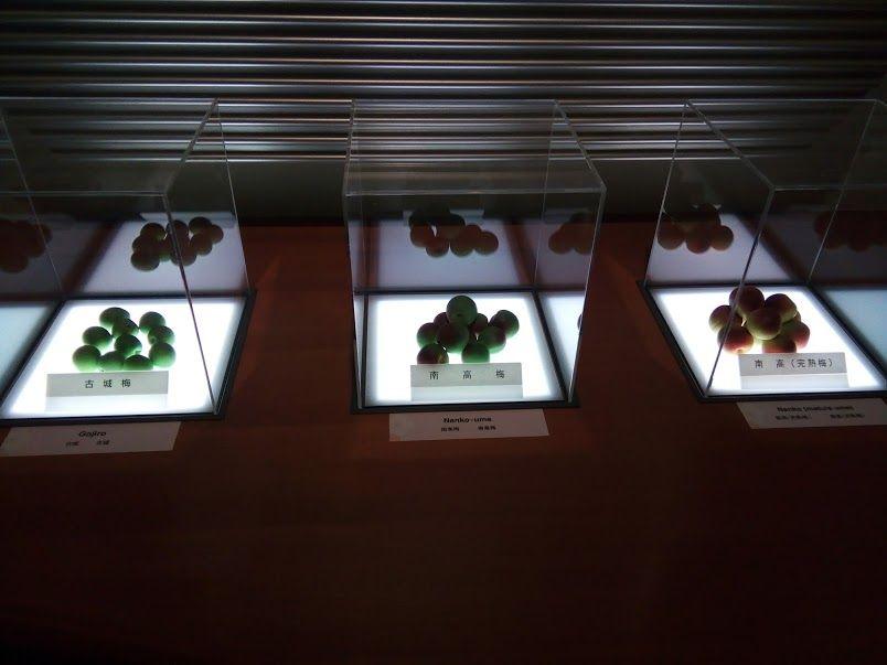 観賞用も含めると500種以上! 梅の種類と品種の多さに驚き!
