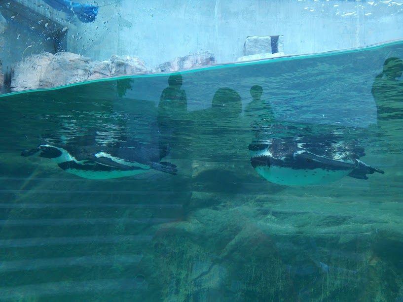 3種類のペンギンが暮らす極地動物館