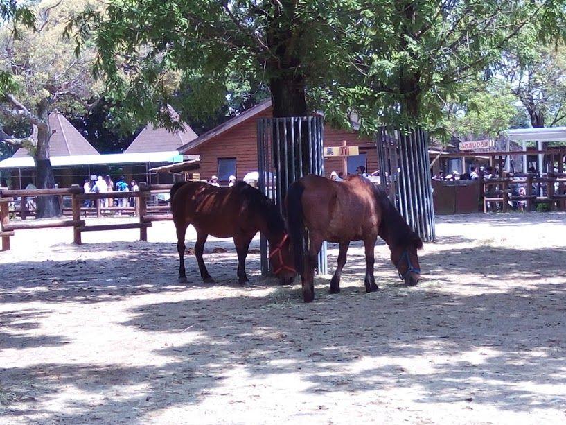 動物との距離も近い!「のんほいパーク」のメインの動物園