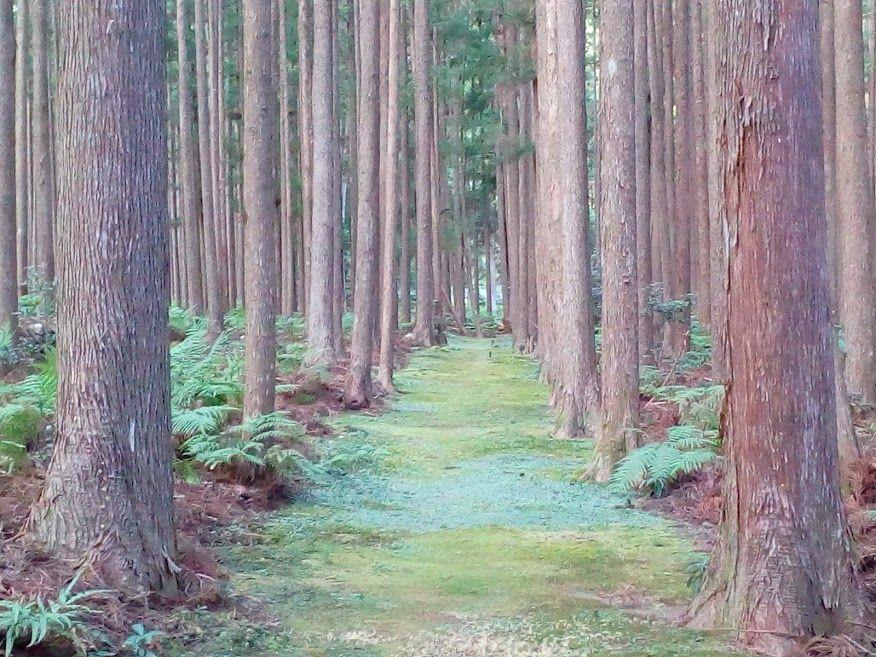 「嶋津の森」にある歴史ロマンを感じる「筏師の道」