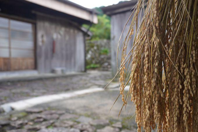 石畳の路に稲穂のはざかけ 世界に誇れる景色です