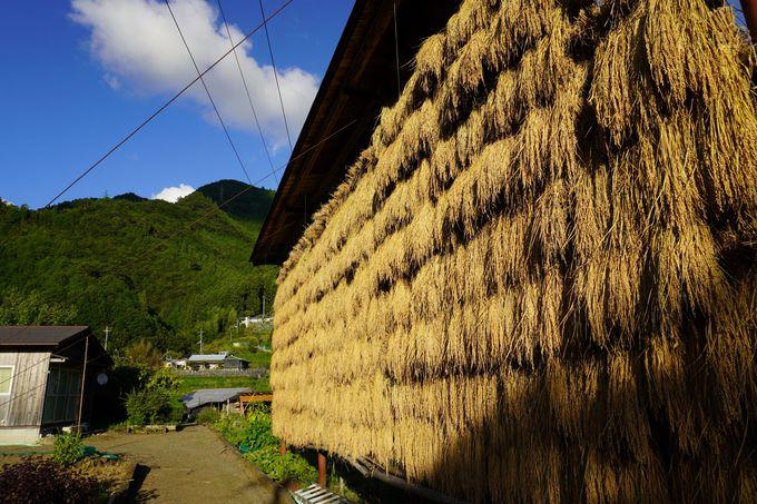 重要無形民俗文化財の大踊りで有名な武蔵地区