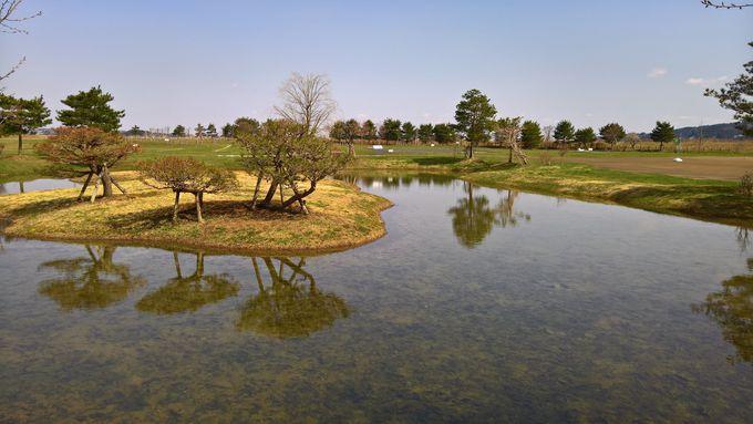 藤原秀衡の息子たちの屋敷跡を巡る岩手・平泉の旅