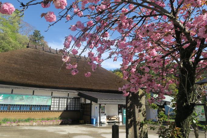 ゴールの「小谷郷土館」に隣接「おたり名産館」は小谷の山の滋味が終結