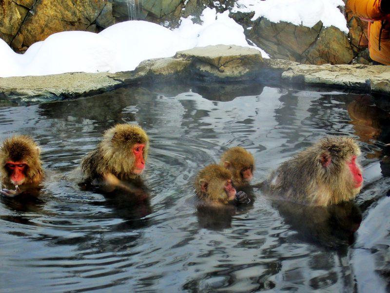 スキーと温泉だけでない!志賀高原のお膝元・信州山ノ内町で遊ぶ