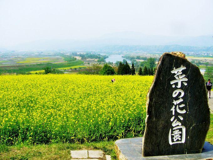 川辺に広がる唱歌『おぼろ月夜』の世界「飯山菜の花公園」