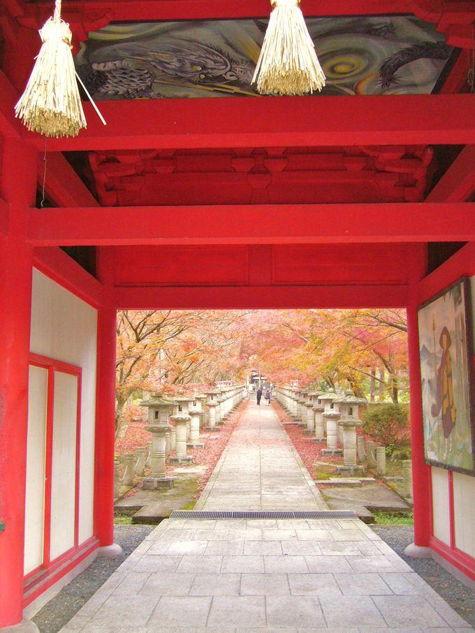 石灯籠の並ぶ参道の紅葉は絶好の撮影ポイントである高山寺