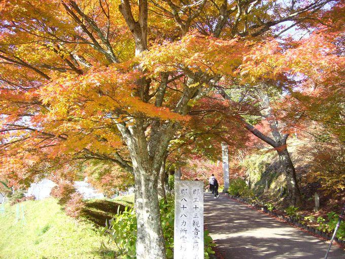 足利義満ゆかりの禅宗の名刹、放生池からの眺めに時を忘れる円通寺