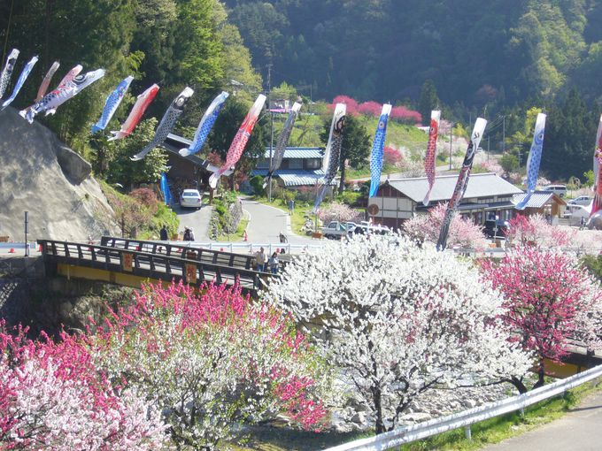 三色のが花桃が咲き誇る夢の桃源郷「園原・月川温泉郷」