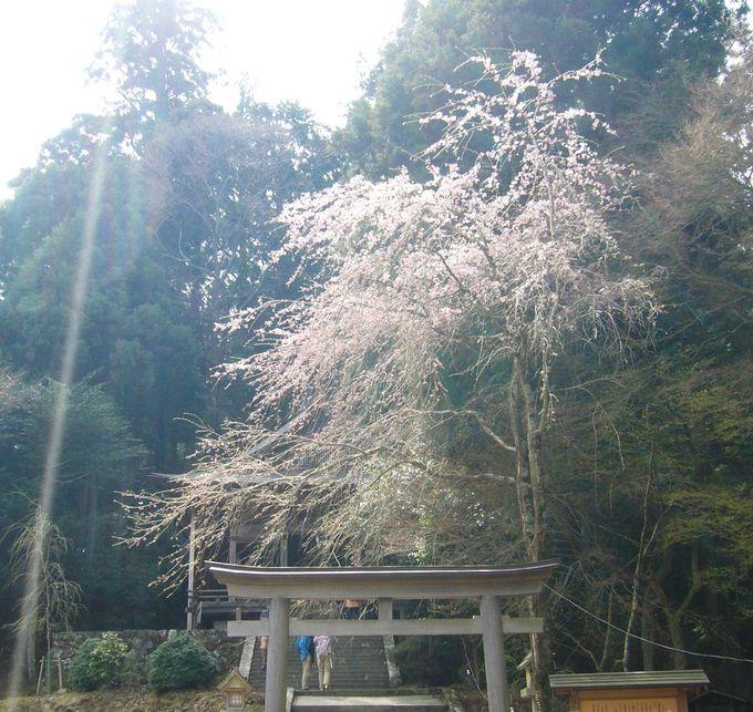 吉野の桜を有名にした西行の庵のある吉野山最奥部の「奥千本」