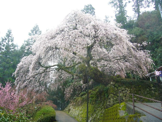 雲も避けゆく 神が棲む その名も知らせる 長谷寺 奥の院「瀧蔵神社」