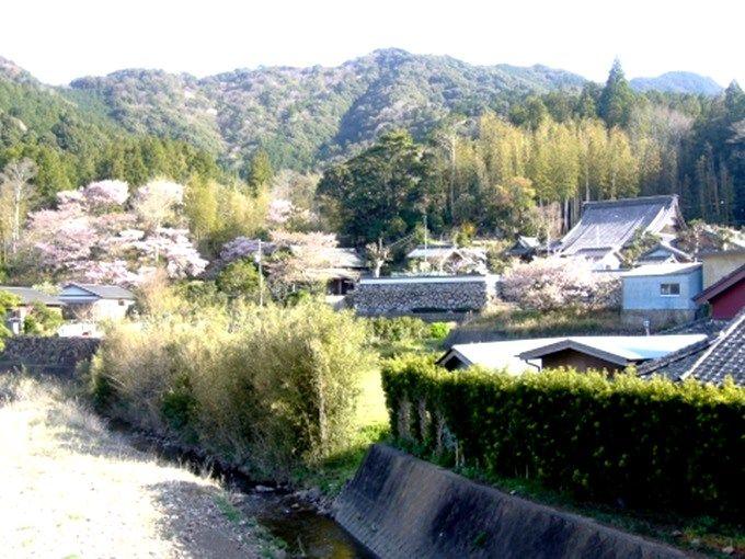 """平家落人伝説の町「横輪町」は""""春""""、桜の町になる。"""