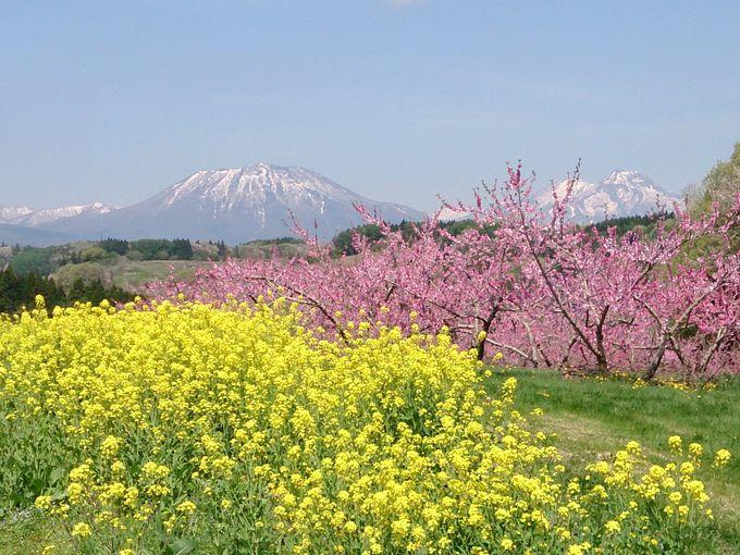 残雪と黄色いタンポポに映える艶やかな風景「丹霞郷」