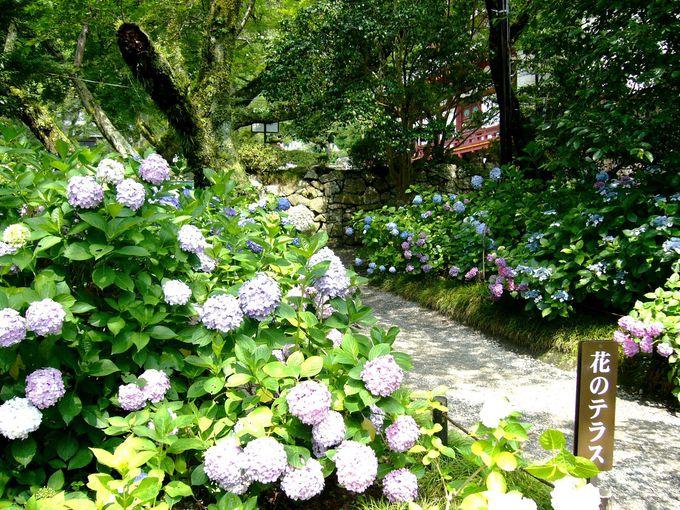 「花のテラス」からあじさい園を一望